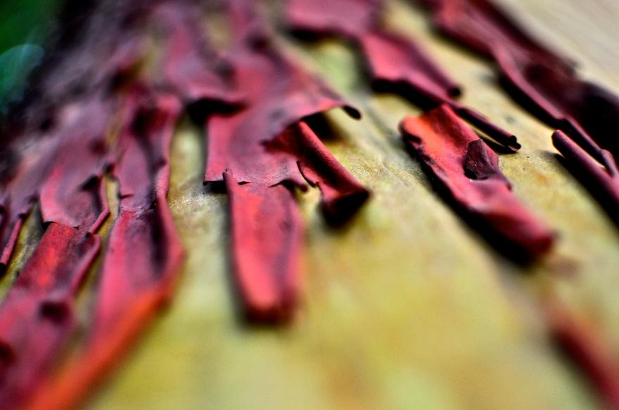Arbutus, Abstract, Macro