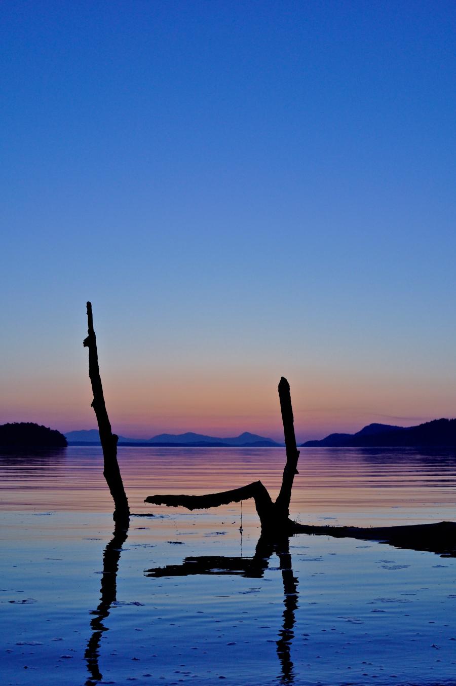 Driftwood Sunset