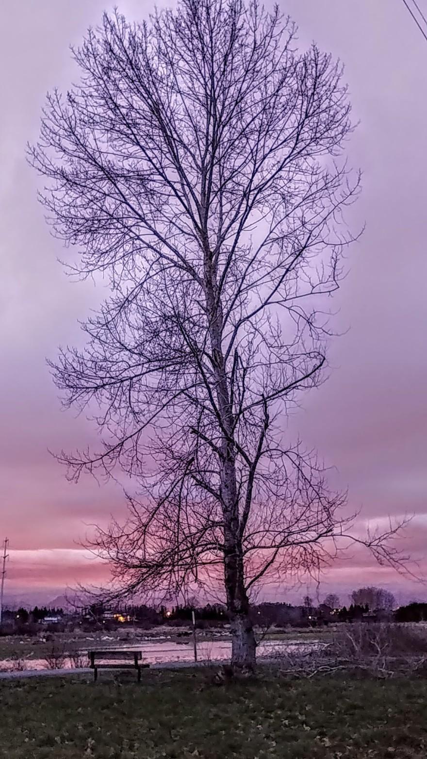 Tree, sunset, dusk, nature, pnw.