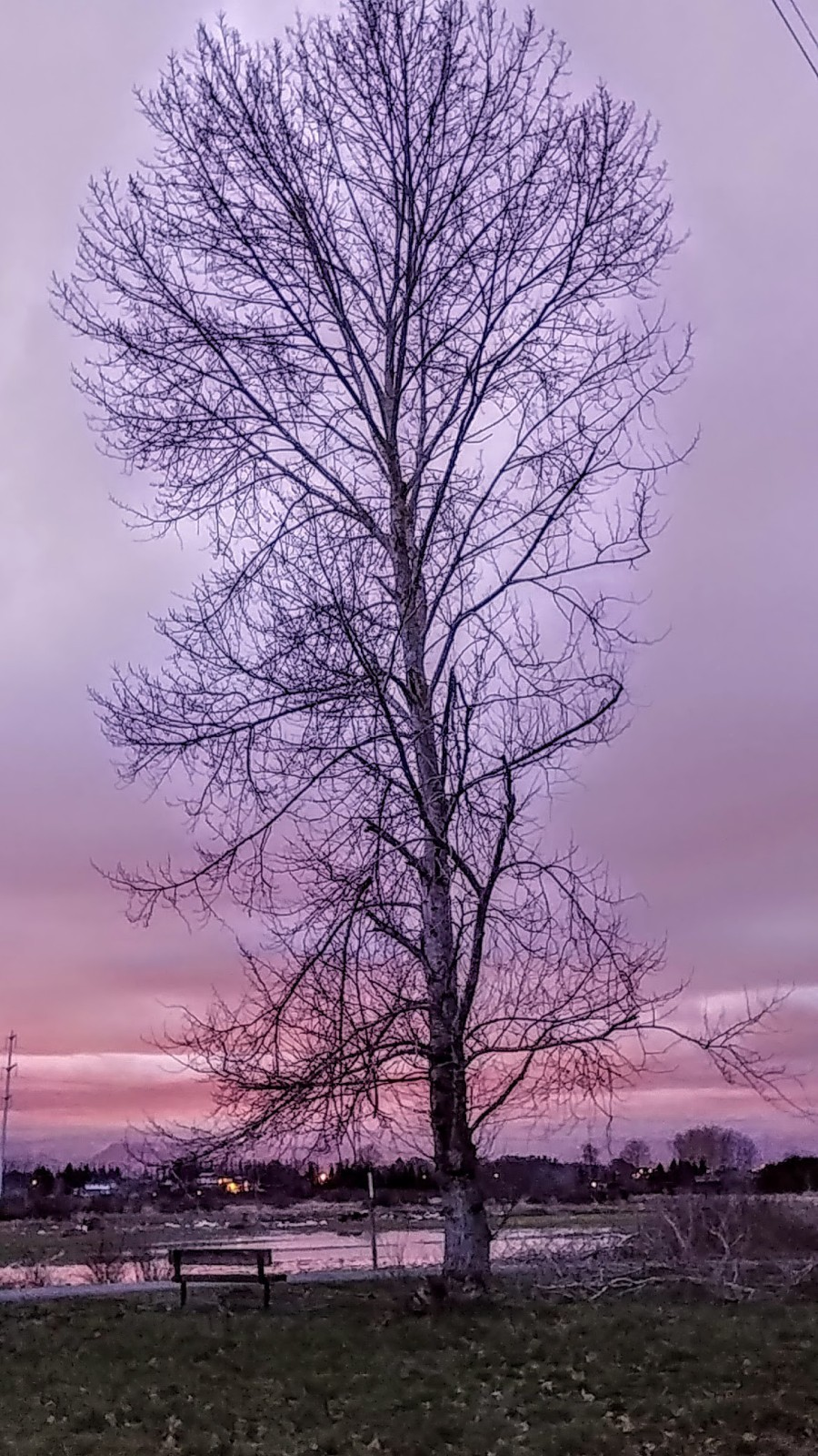Tree, sunset, dusk, nature, pnw.